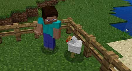 Golden Chicken mcpe 2