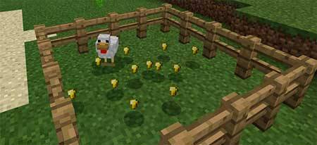 Golden Chicken mcpe 3