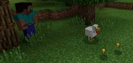 Golden Chicken mcpe 1