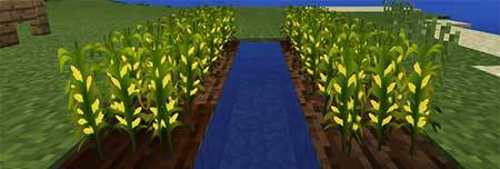 Corn Economy mcpe 2