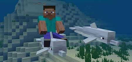 Мод Dolphin Riding для Minecraft PE